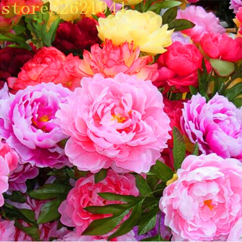 Chinese Peony,10 Pcs Peony Seeds,peony Root Seeds for home garden