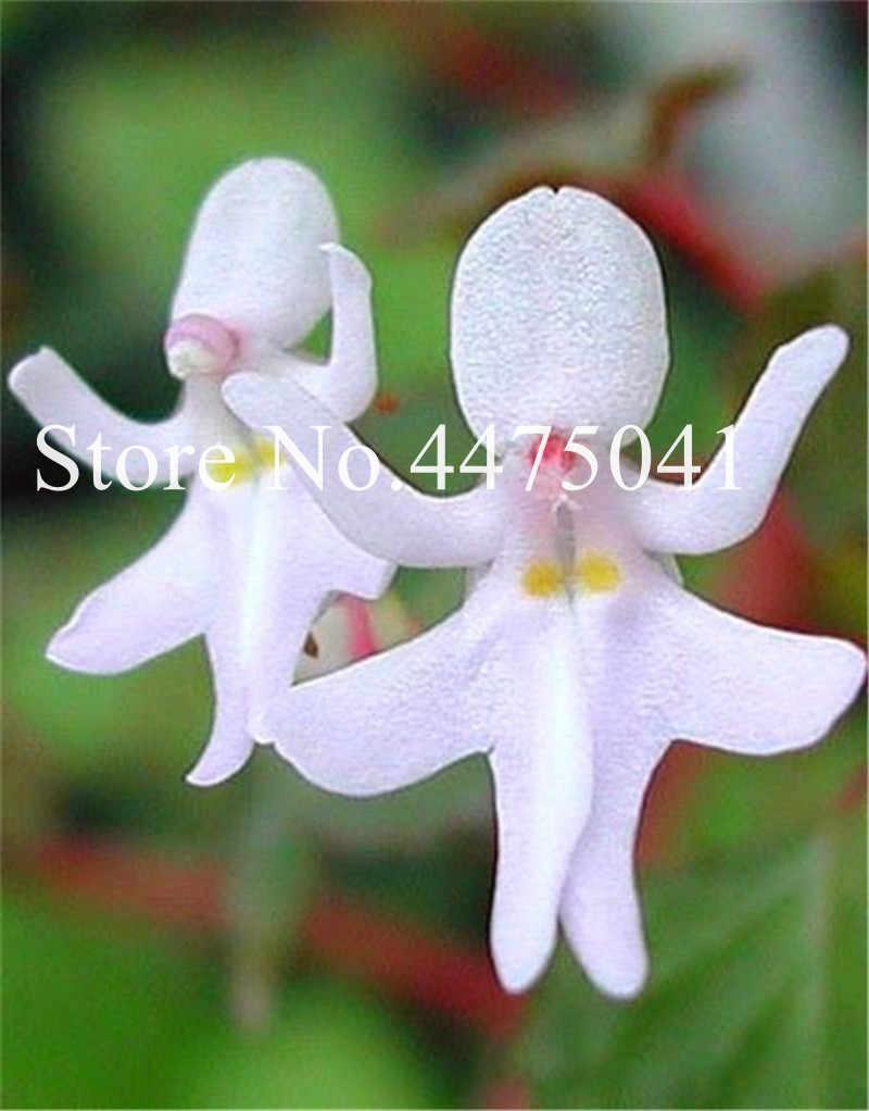 200 шт много цветов Орхидея Cymbidium, японская обезьяна лицо бонсай различные виды орхидей для сада и дома Горячая продажа