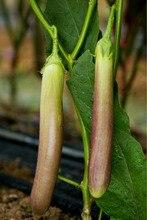 100pcs Organic Thai Eggplant Seeds
