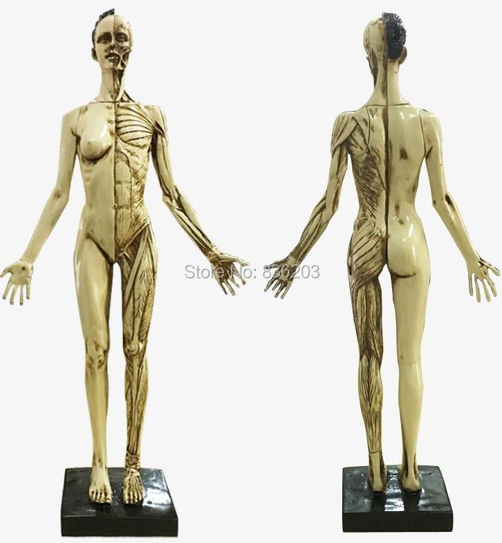 Mini Female anatomy Human heart model skeleton key chain anatomical ...