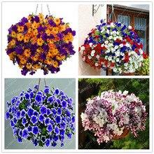 100PCS Mix Color Hanging Petunia Plants Melissa Original Flower Perennial Flowers For Home Garden Bonsai Pot Planting