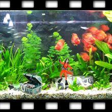 Treasure Hunter Diver Figure Action Fish Diver Tank Ornament Aquarium Decor fish tank Landscape aquarium decoration