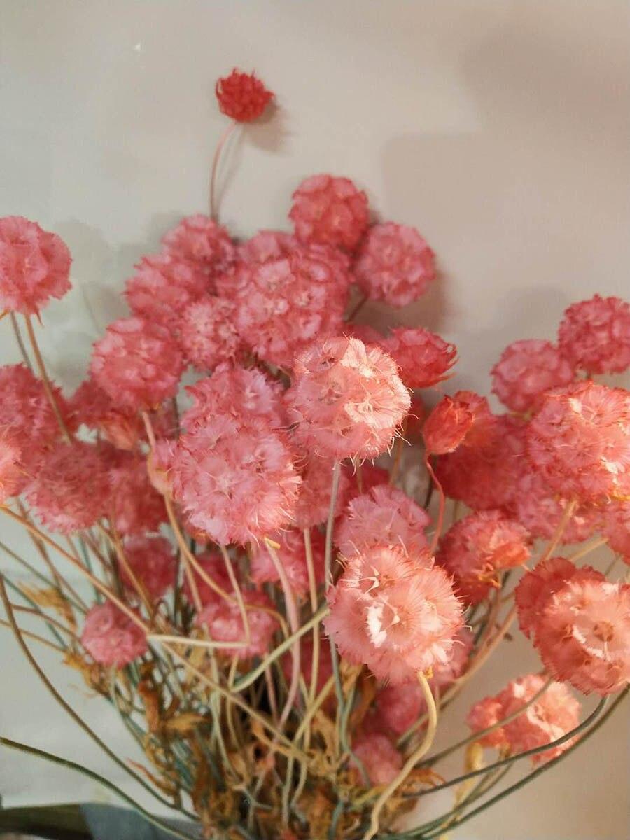 Dried Moss 100g Bag for Floristry CraftsFloristry Crafts Flower Arranging