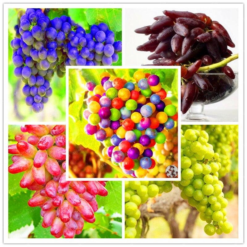 50 pcs grape seed rare senior courtyard plants natural growth grape delicious gardening fruit plants home garden supplies - Delicious Garden