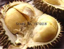 Sale 5pcs A Lot Durian Trees Seeds Delicious King Of Fruit Seeds Giant Outdoor Rare Plants Sementes Funny Bonsai