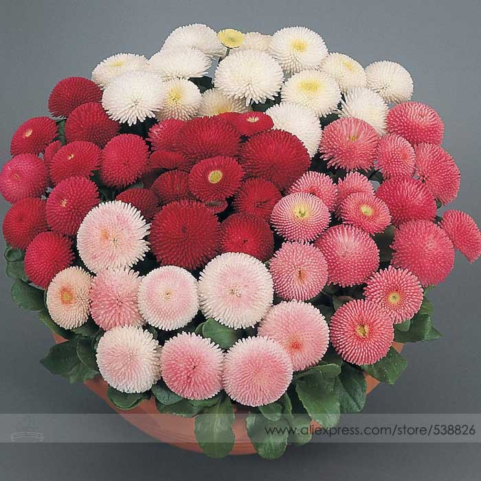 popular daisy flower typesbuy cheap daisy flower types lots from, Natural flower