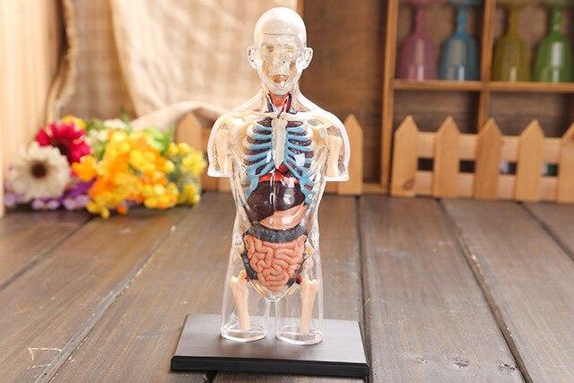 4d анатомии человека