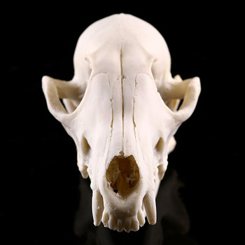 Resin Craft Animal Skull Sculpture 1
