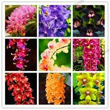 Свежий 100 шт цимбидиевая Орхидея, Цимбидиум Флорес, бонсай цветочные плантации, 22 цвета на выбор, растения для домашнего сада,# 99VJ8T