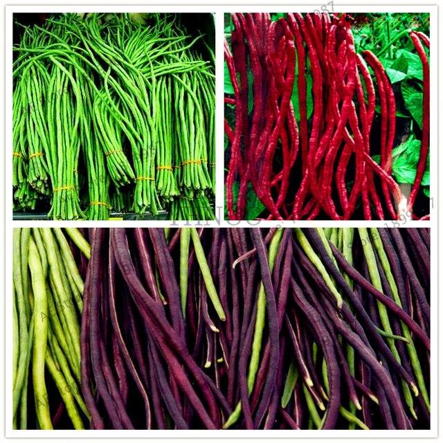 20 pçs/saco Vigna unguiculata Bonsai, Plantas de feijão Verde, deliciosos legumes plantio de plantas para casa e jardim