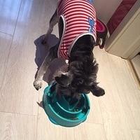 Pet Dog Cat Interactive Slow Food Feeder Bowl Puppy Anti Slip Gulp Feeder Healthy Bloat Dish For Pet Feeding Tools 1Pc 2