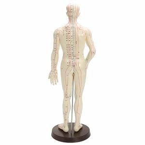 """Image 2 - """"ร่างกายมนุษย์รูปแบบการฝังเข็มชายเส้นเมอริเดียนรุ่นแผนภูมิหนังสือฐาน50เซนติเมตร"""