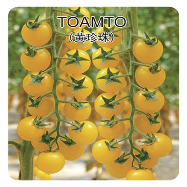 200 семена помидоров Limited Новый Открытый Растения Очень Просто Сад Sementes Исключены Pearl Семена Продажи Овощей