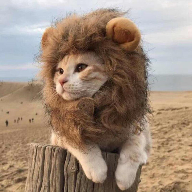 da9ff3cf1 Funny Small Dog Cat Cosplay Lion Wig Head Cap Hat with Ear for Puppy Cats  Autumn Winter Dress Up Costume Muffler Scarf