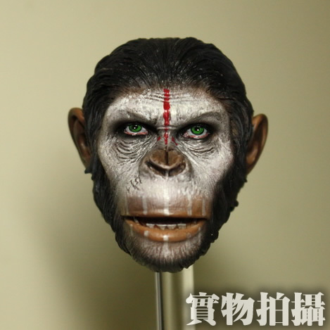 Brand New 1/6 Scale Rise of the Planet of the Apes Caesar Head Sculpt For 12'' Action Figure Model Toy Accessories