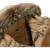 El envío libre 2017 hombres chaqueta de invierno hombres parka Con cuello de piel Gruesa caliente Alargar hombres chaqueta de invierno Joven 230HFX