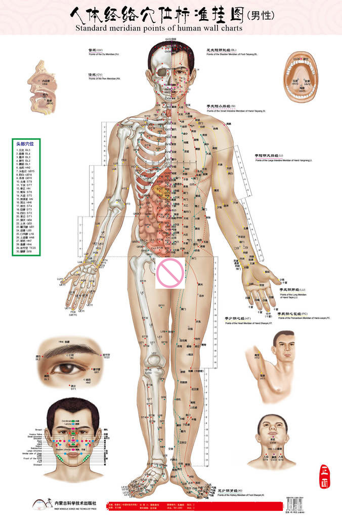 Mâle humain méridien points Wallmap acupuncture massage