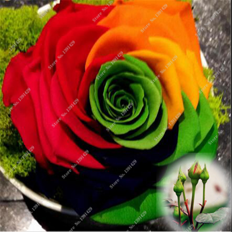 online get cheap rainbow flowers roses aliexpress  alibaba group, Beautiful flower