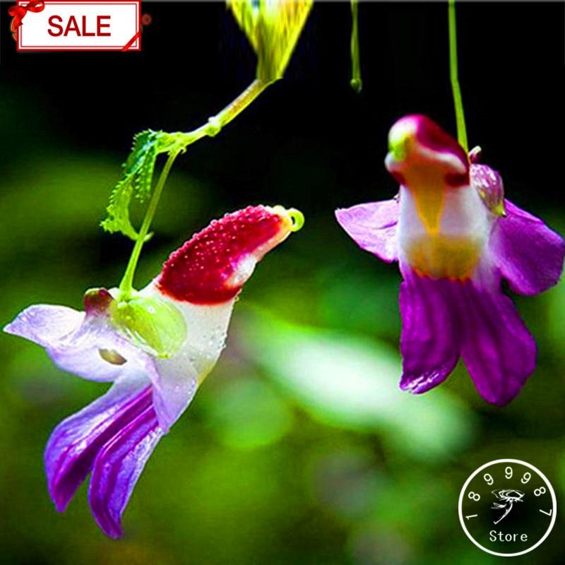 Hot Salechina Rare Parrot Orchid Flower Seeds Worlds Rare High