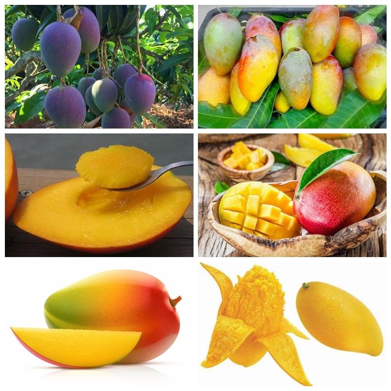 1 Pcs Bag Mango Plant Gaint Mango Tree Tropical Bonsai Organic Home Garden Fruits Vegetables Pot Seedfor Flower Pot Planters In Bonsai From Home