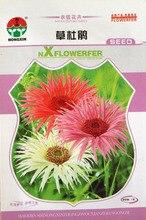 Цветок семян Трав кукушка семена азалия Дизайн и цвет Красочный Цветения Длинный балкон Горшках 1 г/пакет