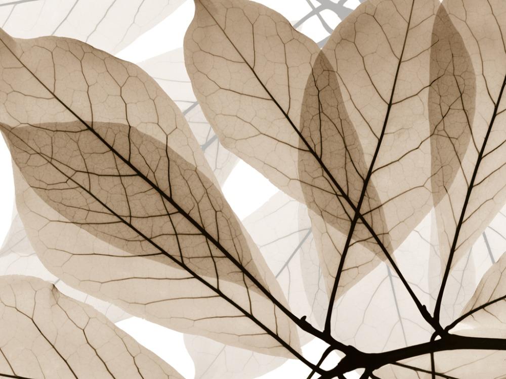 Custom size 3d gordijn bamboe photo print breiden ruimte water