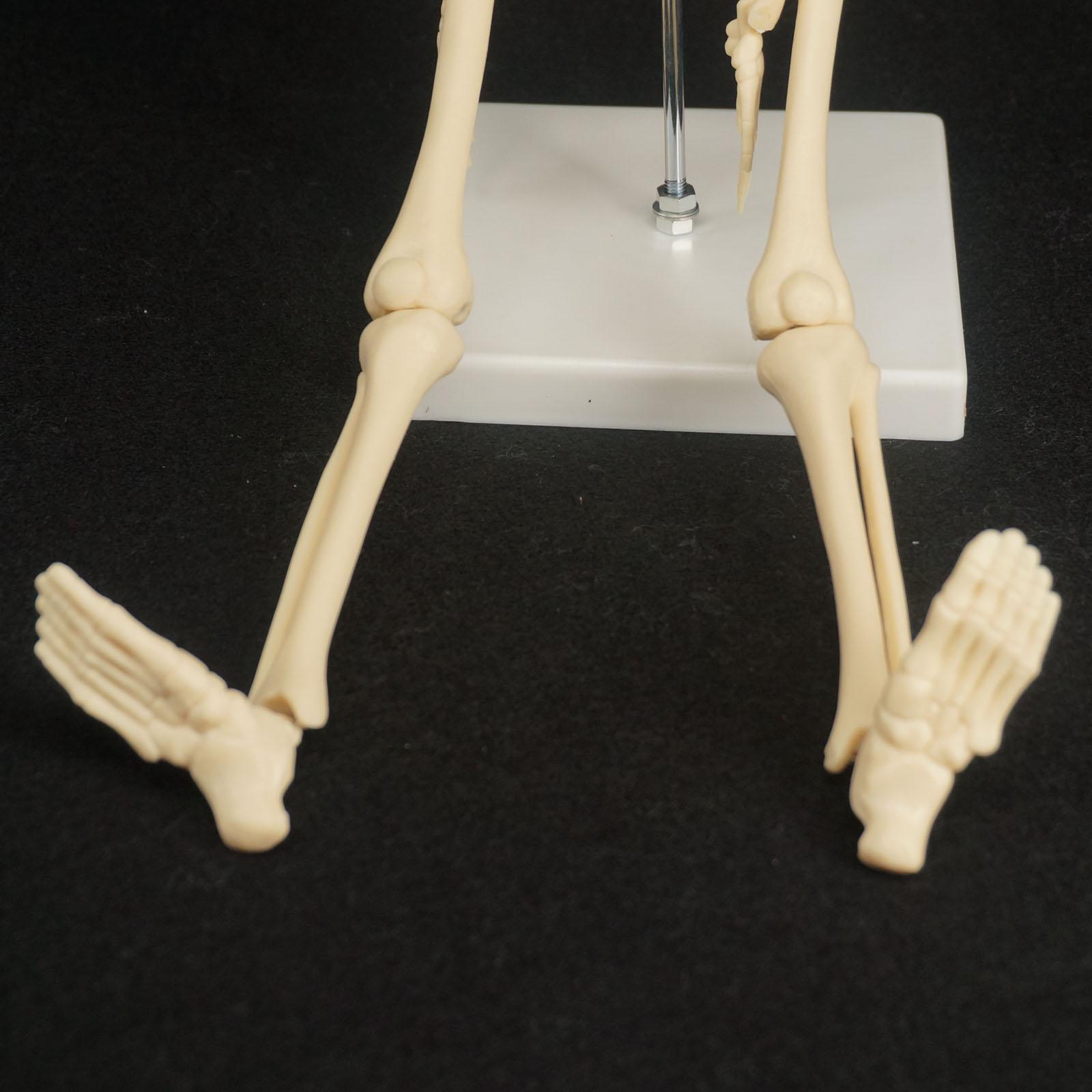 Berühmt Anatomie Hilfe Zeitgenössisch - Menschliche Anatomie Bilder ...