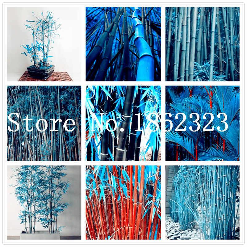 Новый Красочный карликовый бамбук в горшке, бонсай Moso дерево завод для украшения дома сада Горшечное растение завод оптовая продажа 50 шт Бесплатная доставка