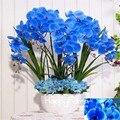 Hot Sale!9 Varieties Phalaenopsis Seeds Perennial Flowering Plants Potted Charming orchid Flowers Seed,50 pcs/bag,#44LI74