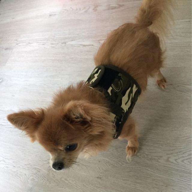 Small Pet Dog Harness