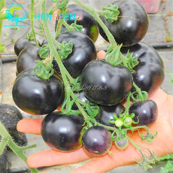 200 шт./пакет черный томат бонсай редкие овощи фрукты карликовые деревья Высокое качество Лето еда 90% + прорастание цветочный горшок плантаторы
