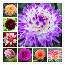Бесплатная доставка 100 шт. разноцветные Георгин Флорес бонсай Цветочный ЗАВОД plantas для дома и сада, # U4R4DS