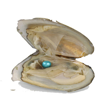 Bulk 50Pcs Vacuum pack Oyster Wish Freshwater Pearl 6-7mm Mix Color Oyster Oval Rice Pearls blue ZH001