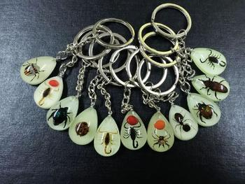 FREE SHIPPING 50 PCS Fashion Jewelry Key Chains lovely mixed real insect glow drop style keychain