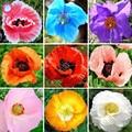 100 шт./пакет смешанные цвета Мак карликовые деревья цветок редкий Papaver orientale комнатные растения для дома садовое насаждение - фото
