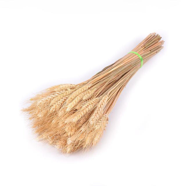 Natural dried flower 10