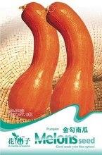 Cucurbita pepo Семена, оригинальная Упаковка 8 зерна Сад семена Овощных культур, легко Расти Gold крючок тыквы