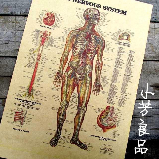 Vintage papír poszter - angol szó Emberi idegrendszer Ábra 42 * 30cm Retro papír dekoráció Személyre szabott hűvös poszter