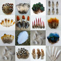20 pcs cheap retail 15 kinds of  pheasant feathers 4-9 cm  beautiful plume DIY Craft decoration Free Shipping