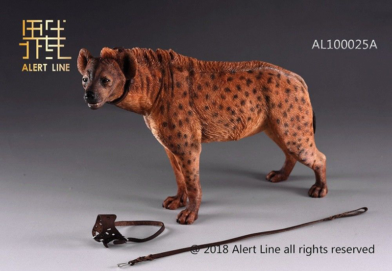 Alert Line AL100025 Crocuta Crocuta Dog1 6 Scale With Leash Animal toy for 12 inches Action Figure Scene accessorie Collections in Action Toy Figures from Toys Hobbies