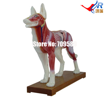 Dog Acupuncture Model, Animal Acupuncture Model