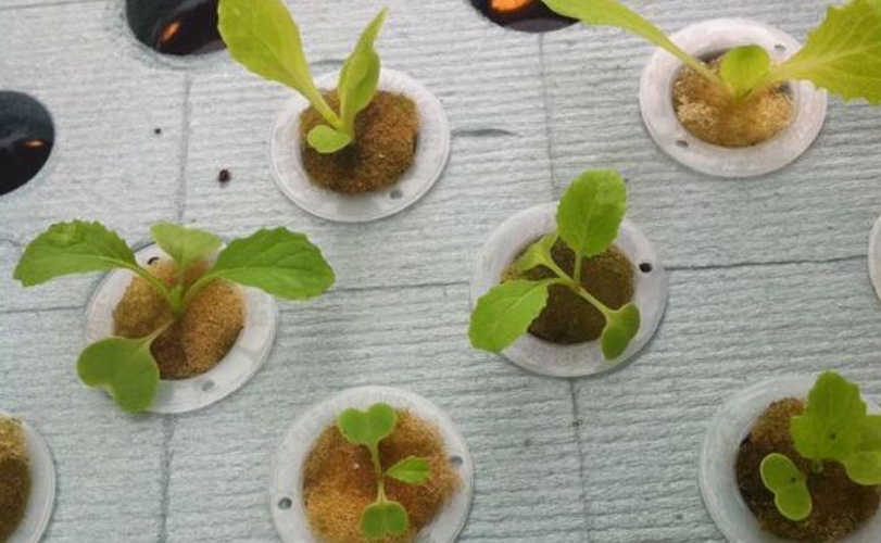 10 pçs/lote Herb Garden Plantador de Cesta de Flores Pote Suculento Cocho Planta Caixa de Plantio Net