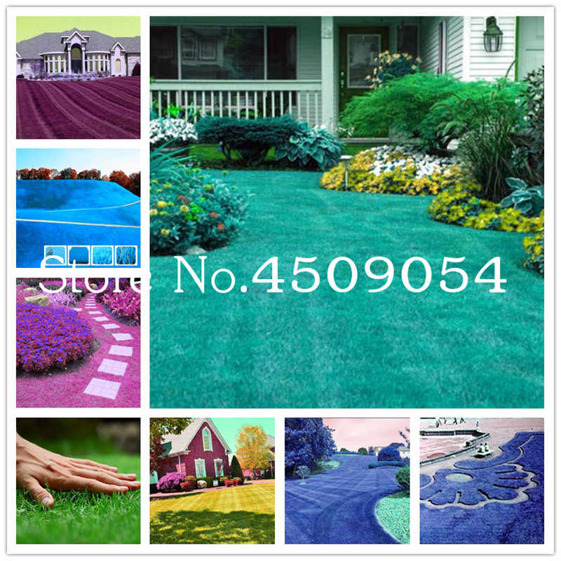 200 Pcs Rare Blue Turf Grass Bonsai,Golf,Special Grade Lawn Grass,Soccer Fields,Villa,High-grade Flowers Home Garden Plant