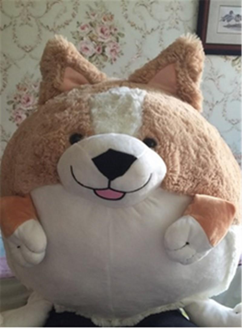 Corgi dog17