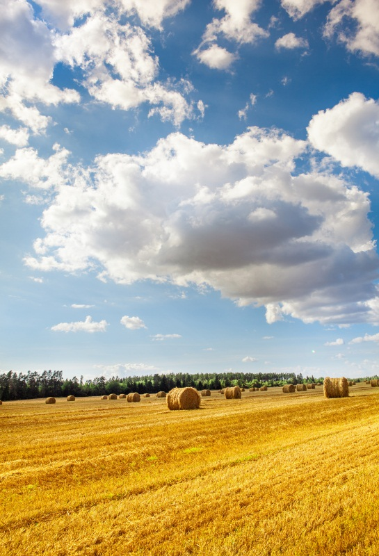 Laeacco Summer Farm Field Harvest Wheat Hay Bales Photography Backgrounds Vinyl Custom Photo Backdrops Props For Photo Studio