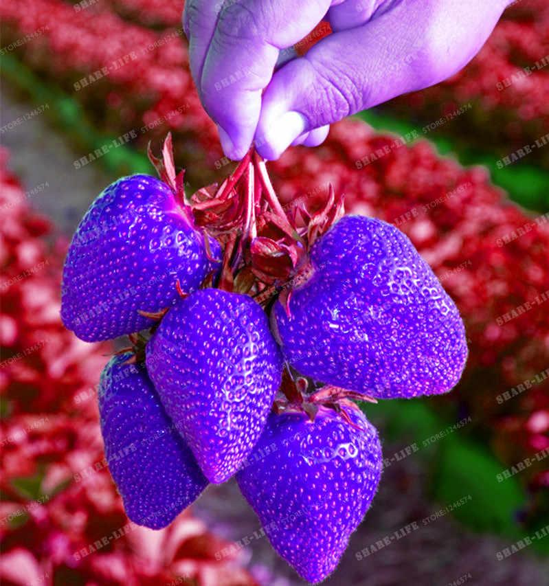 500 шт синий ароматный дерево бонсай очень вкусные Редкие синие Клубничные фрукты, технология бонзаи для дома и сада бонсай отправлено c розами, подарок