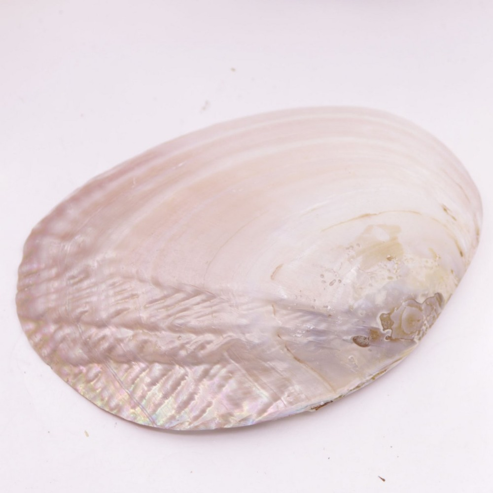 "Купить с кэшбэком Natural Mother of Pearl Shell Clam Display Tray 11cmX16.5cm Collection 6.5"" 1 PCS"