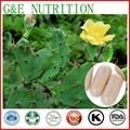 Venda quente Cactus/Cactaceae/Cactos/pera Espinhosa Cápsula com frete grátis, 500 mg x 200 pcs