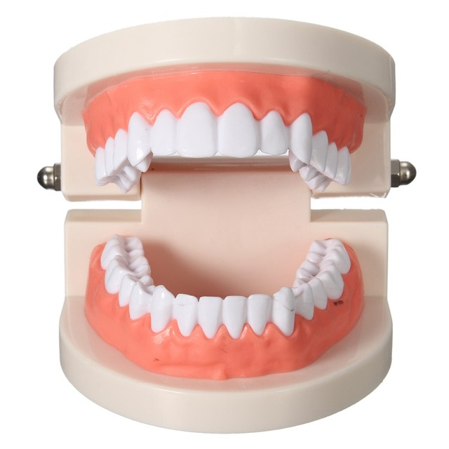 1 Pcs Model Dewasa Standar Model Mulut Dokter Gigi Typodont Gigi