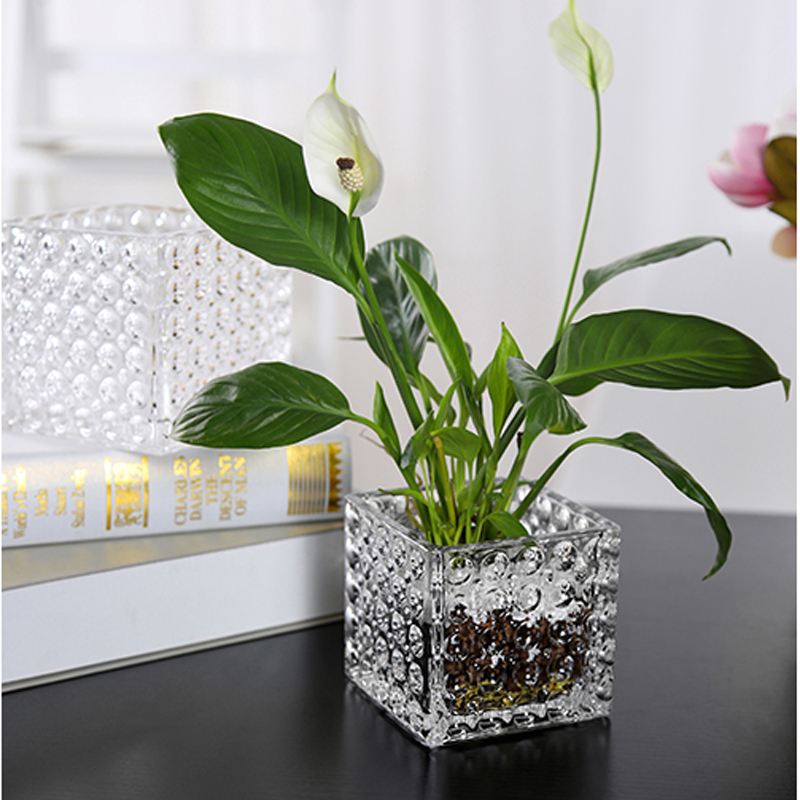 Narcissus Glass Basin Lavender Water Lily Grass Hydroponic Flowerpot Succulents Vasos Para Green Plant Flower Pot Europe Modern in Flower Pots Planters from Home Garden